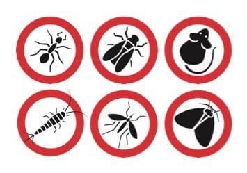 Roxasect, jouw expert bij <b>insectenbestrijding</b>